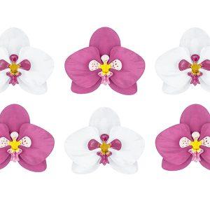 Hawaii Orkideer